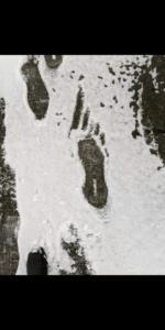 IMG 4908